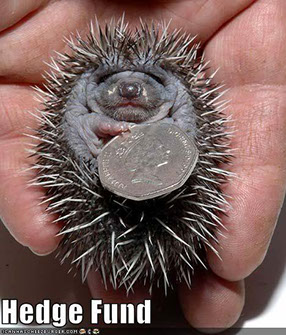 Hedgehogs and their hoglets need our help and we need donations to do that